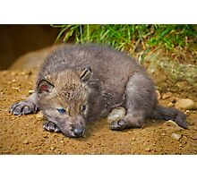 Blue Eyed Pup Photographic Print
