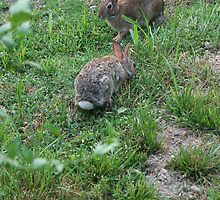 Bunny Love 2 by WalnutHill