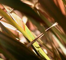 Flax by Jen  Hutchison