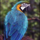 Looking Back Blue by ldermid75