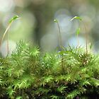 Moss Capsules by Michael John