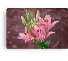 Pink lilies - textured Canvas Print
