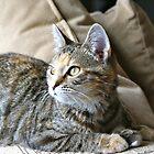 Tabby gazer  by basalt101