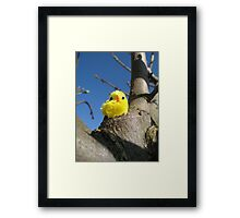 Chick in a Tree Framed Print