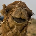 Camel close-up by Gillian Anderson LAPS, AFIAP