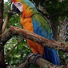 Striking Colors by ldermid75