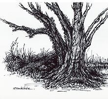 Ancient Oak Sketch by Margaret Stockdale