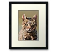Portrait Of A Cute Tabby Cat With Direct Eye Contact Framed Print