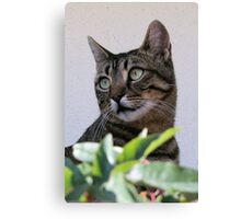Tabby Cat Sitting In The Shade Behind Passiflora Vine Canvas Print