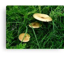 Mushrooms in Triund Hill Canvas Print