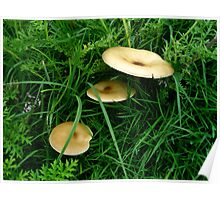 Mushrooms in Triund Hill Poster