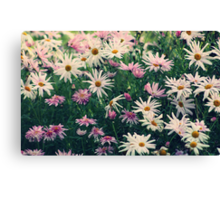A Daisy a Day Canvas Print