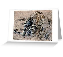 Leopards Mating Greeting Card