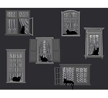 Cats in Windows Photographic Print