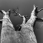 looking up a tree by Leigh Monk