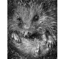 Mr Hedgehog Photographic Print