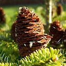 bright cones by Babz Runcie