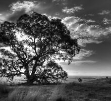 Tree on a hill by Leigh Monk