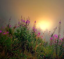 Cascades Fog and Fireweed by Charles & Patricia   Harkins ~ Picture Oregon