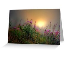 Cascades Fog and Fireweed Greeting Card