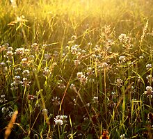 walking through the long grass on your hands by AliceThres