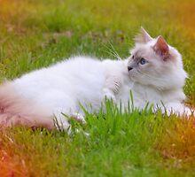 Sunbathing by BrightBrownEyes