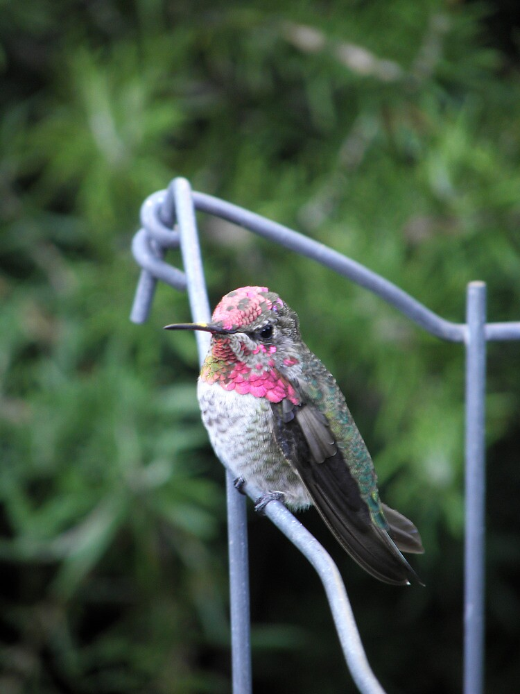 Bird on a Wire by Robert Arconti