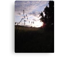 Sunset over cross-shaped grass Canvas Print