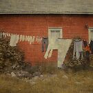 Wash Day by Steve Silverman