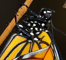 Spots - Monarch Butterfly by JaanaWilson