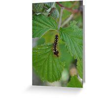 Creepy crawly caterpillar Greeting Card