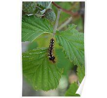 Creepy crawly caterpillar Poster
