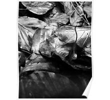 Metalic leaves Poster