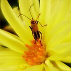 Lightning bug..... by DaveHrusecky