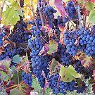 In the Vineyard II by CherylBee