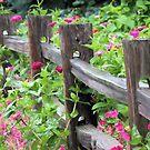 Zinnias Along the Fence by Brian Gaynor