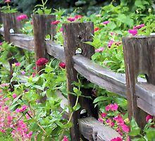 Zinnias Along the Fence by Brian Gaynor