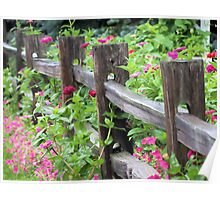 Zinnias Along the Fence Poster