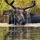 Leaking Antlers by Rodney55