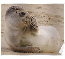 Seal Poster