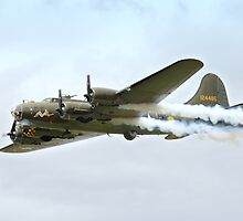 Sally B Collection by Nigel Bangert