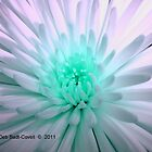 Celestial Aster by Deb  Badt-Covell