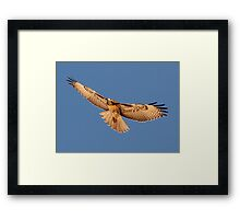 0709112 Red Tailed Hawk Framed Print