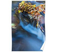 river autumn Poster