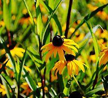 In the Field by Corinne Buescher