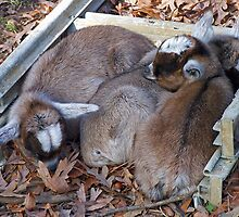 Snuggling in the sun by Susan Blevins