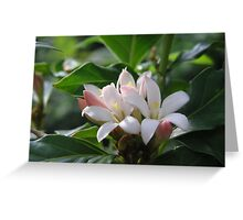 First Light on African Gardenia Flowers Greeting Card
