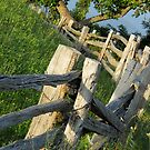 The old rail fence by Jamie  Armbruster