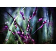 Random Photographic Print