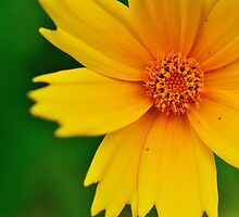 A Yellow Friend by Christopher Gaines